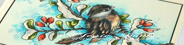 chickadee-3