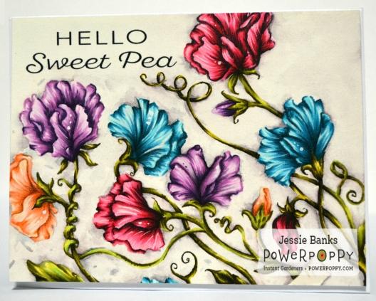 pp-sweet-pea